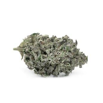 Tantalus Labs Sunset Sherbert cannabis flower